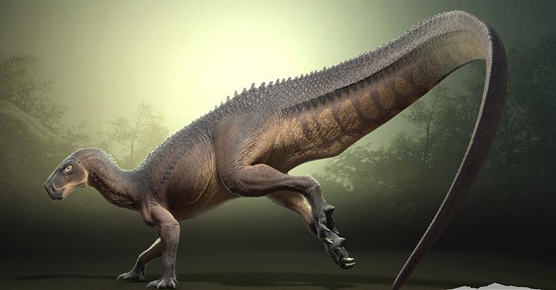 ไดโนเสาร์ ยุคดึกดําบรรพ์อย่าง Tenontosaurus